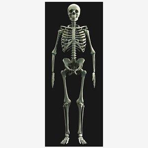 3D human skeleton - bone