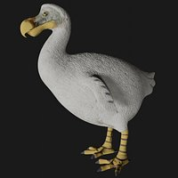 Realistic low polygon rigged dodo bird