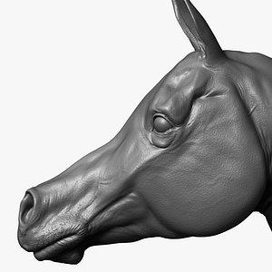 horse arabian 3D model