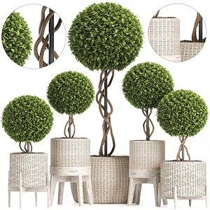 Wicker Woven Tree Topiary - Indoor Plant 222 3D model