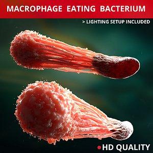 Macrophage eating bacteria model