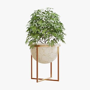 3D indoor plants model