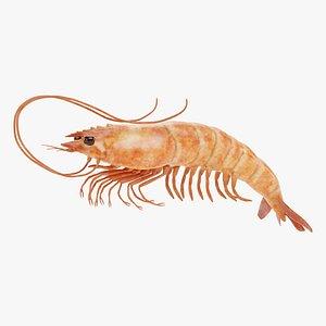 Shrimp 3D