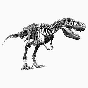 3D tyrannosaurus rex skeletons -