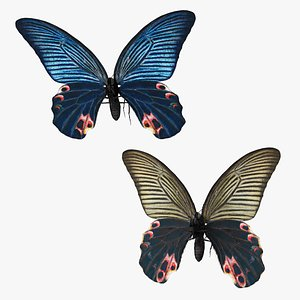 Papilio Protenor Butterfly Male and Female Collection 3D model