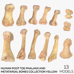 3D Human Foot Toe Phalanx and Metatarsal Bones Collection Yellow - 13  models