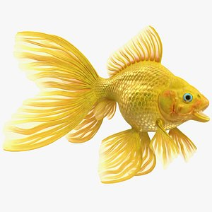 3D Goldfish Rigged for Cinema 4D