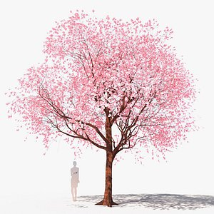 3D cherry tree flowering  prunus avium B
