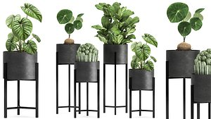 3D Houseplants in a black pot for the interior 909