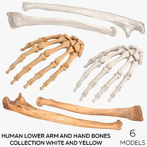 3D Human Lower Arm and Hand Bones Collection White and Yellow -  6 models