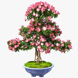 Green Bonsai Tree with Flowers in Pot Fur 3D model