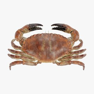 edible crab 3D model