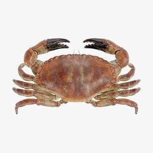 edible crab 3D model