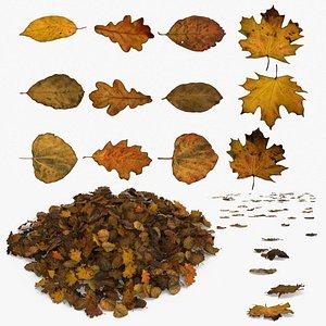 3D Autumn Old Leaves Trash