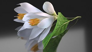 white flower styrax 3D model