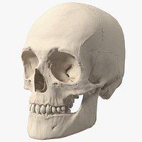 Anatomy 3d models