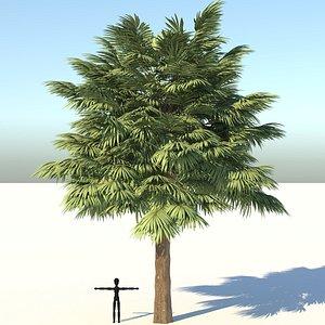 palmetto palm tree 3D