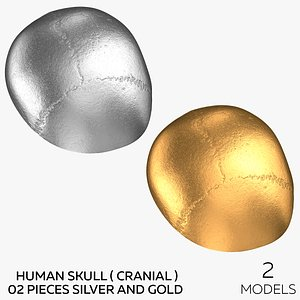 Human Skull  Cranial  02 Pieces - Silver and Gold 3D