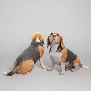 3D Beagle dog 18