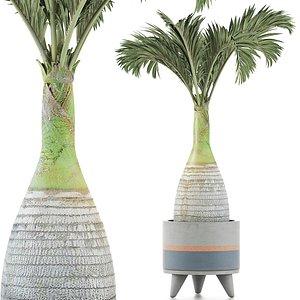 palm plants 3D