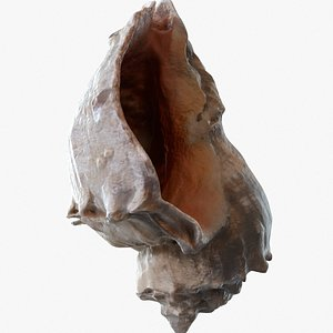 3D animal shell