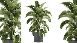 decorative banana palm interior 3D model