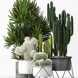 Delicate cactus plant collection 3D model