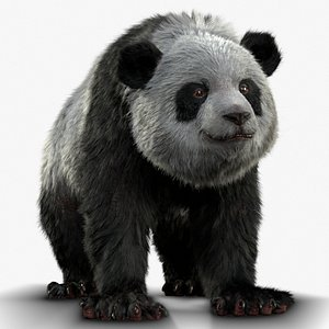 3D Giant Panda RIGGED model