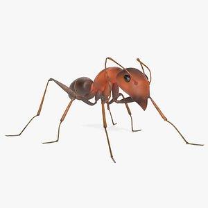 3D Ant