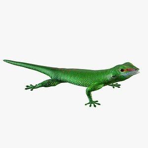 Madagascar Day Gecko model