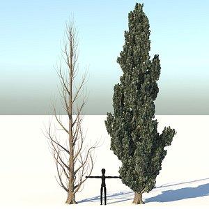 tree nigra populus 3D model