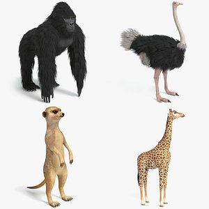 gorilla ostrich meerkat 3D model