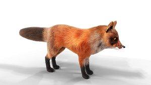 3D Hair Fur Red Fox Low-poly 3D model model