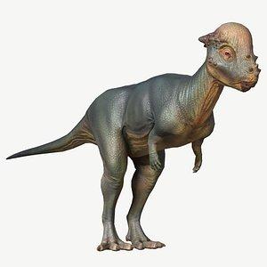 3D dinosaur animal pachycephalosaurus model
