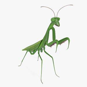3D praying mantis model