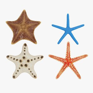 starfish star fish 3D