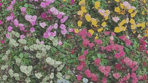 3D Flowers bush bundle - scanned Low-poly 3D model model