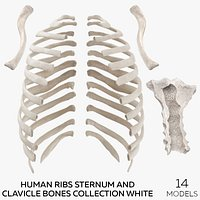 Human Ribs Sternum and Clavicle Bones Collection White - 14 models