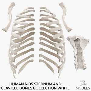 3D Human Ribs Sternum and Clavicle Bones Collection White - 14 models model