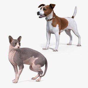 pets sphynx cat model