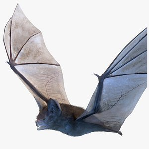 3D Vampire Bat with Fur Rigged Animated