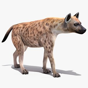 3D walking pose hyena model