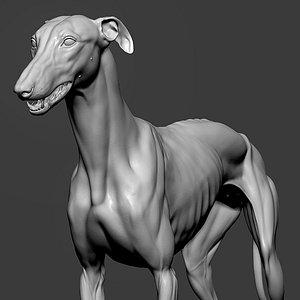 3D greyhound dog hound model