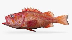 3D rougheye rockfish
