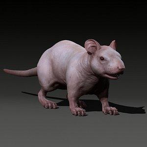 animal rat 3D model