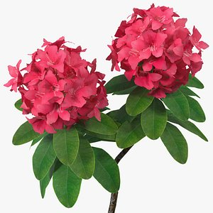 rhododendron flower 3D