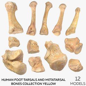 3D Human Foot Tarsals and Metatarsal Bones Collection Yellow - 12 models