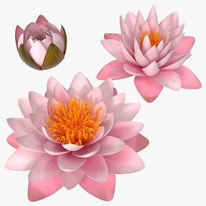 3D Nymphaea Colorado Pink Lily Set model