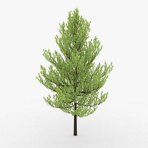 tree blender dae 3D model
