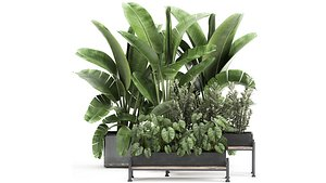 3D Houseplants in a black pot for the interior 914